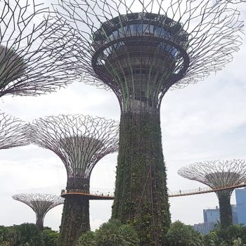 Reiseziele Singapur - Gardens by the Bay